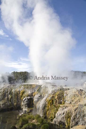 ROTORUA NORTH ISLAND NEW ZEALAND May Hot steam rising from Pohutu geyser in Whakarewarewa Geothermal valley in Te Puia