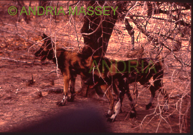 HOEDSPRUIT SOUTH AFRICA