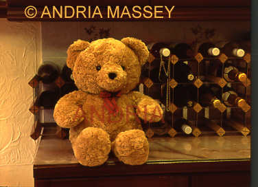 Teddy sitting in front of a full wine rack