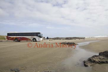 AUPORI PENINSULA NORTH ISLAND NEW ZEALAND May One of the coaches that drive tourists along the Ninety Mile Beach at The Bluff