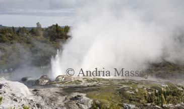 ROTORUA NORTH ISLAND NEW ZEALAND May Hot steam rising from the Prince of Wales and Pohutu geysers of Whakarewarewa Geothermal valley in Te Puia