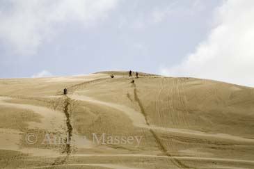 AUPORI PENINSULA NORTH ISLAND NEW ZEALAND May Group of people sand surfing down the giant dunes bordering Te Paki Stream