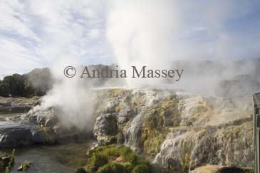 ROTORUA NORTH ISLAND NEW ZEALAND May Hot steam rising from the Prince of Wales and Pohutu geysers in Whakarewarewa Geothermal valley in Te Puia