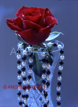 Red rose and draped jewellery with blue background