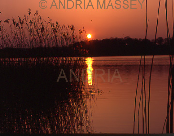 Frensham Surrey Sunset over the Great Pond - with reeds in the foreground