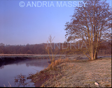 Thundery Meadows Surrey