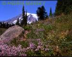 PARADISE WASHINGTON STATE USA