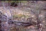 KRUGER NATIONAL PARK SOUTH AFRICA Leopard