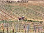 SAN LEONINO TUSCANY ITALY Ploughing between the vines