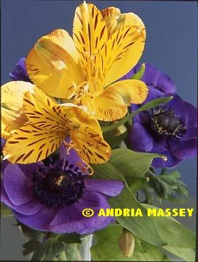 Alstroemeria Jamaice & Anemone Mona Lisa Blue  Format: Medium