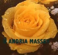 Close up of Yellow Rose  Format: Medium