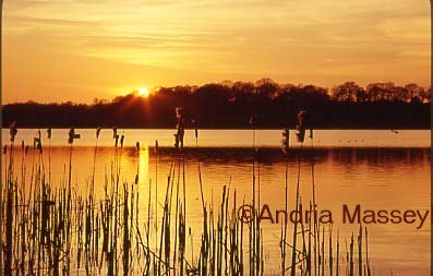 Frensham Common Surrey Sunset over the Great Pond  Format: 35mm