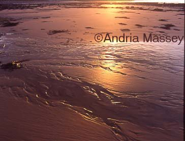 West Runton North Norfolk  Low sun reflecting in water on the  beach
