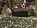 Abandoned church in Arinsal Andorra  Format: Medium