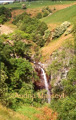 Waterfall on River Twnmyn at Dylife Gorge near Llanidloes  Powys  Format: 35mm
